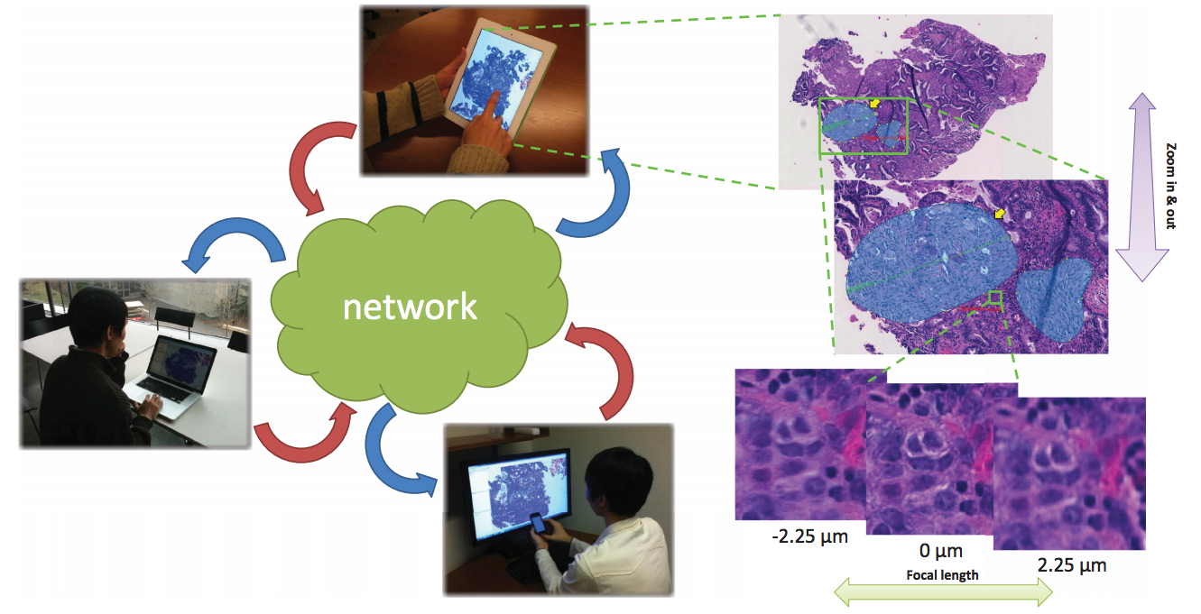 A Collaborative Digital Pathology System for Multi‐Touch Mobile and Desktop Computing Platforms