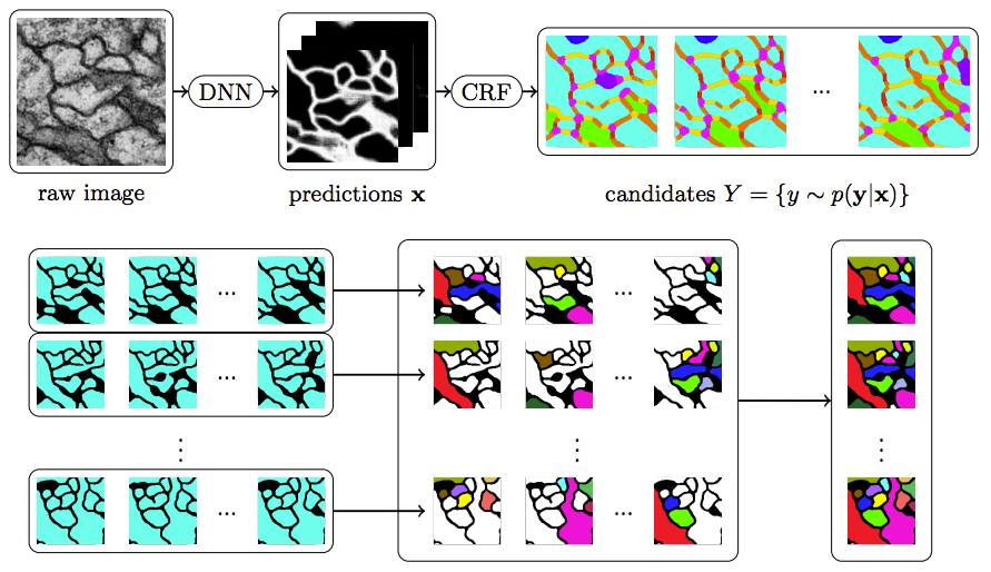 Candidate Sampling for Neuron Reconstruction From Anisotropic Electron Microscopy Volumes