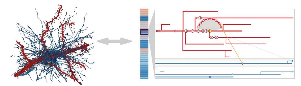 NeuroLines: A Subway Map Metaphor for Visualizing Nanoscale Neuronal Connectivity