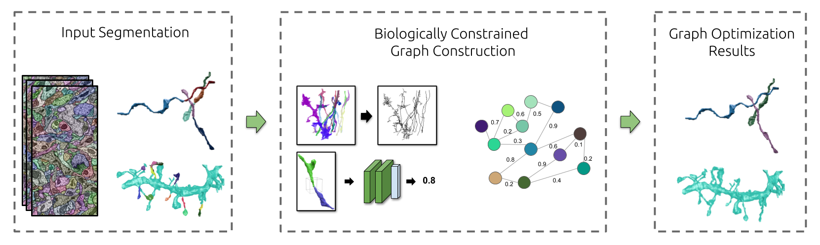 Biologically-Constrained Graphs for Global Connectomics Reconstruction