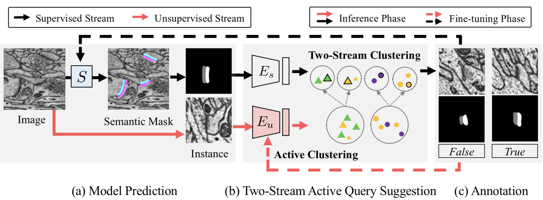 Two Stream Active Query Suggestion for Active Learning in Connectomics