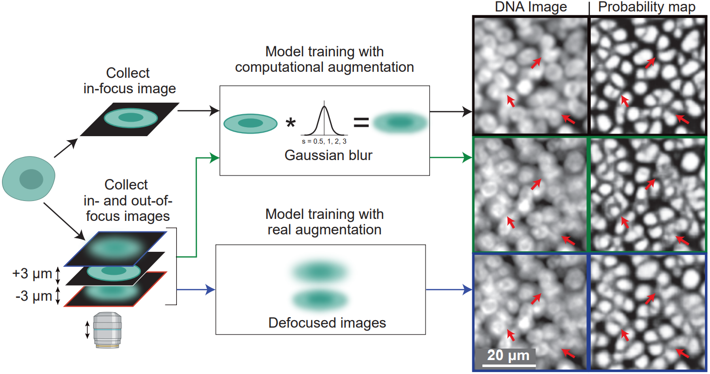 UnMICST: Deep learning with real augmentation for robust segmentation of highly multiplexed images of human tissues