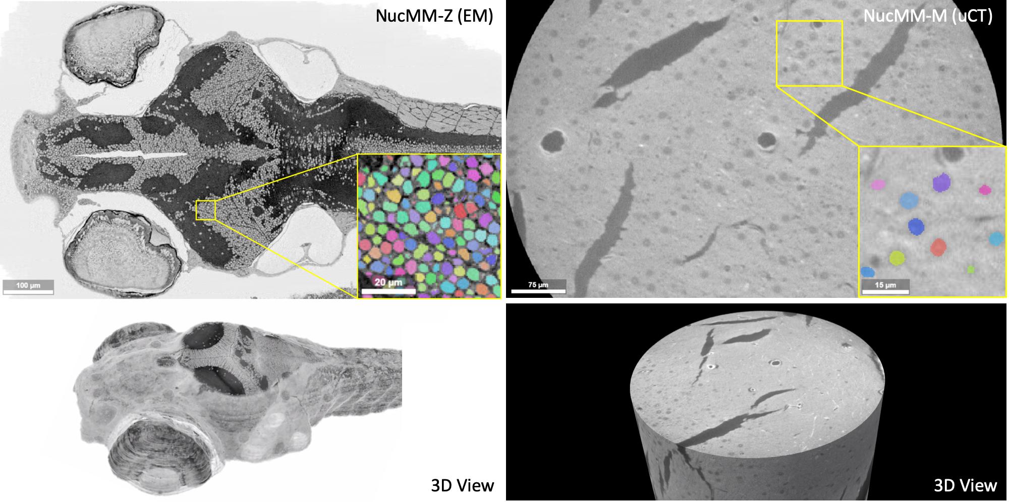 NucMM Dataset: 3D Neuronal Nuclei Instance Segmentation at Sub-Cubic Millimeter Scale