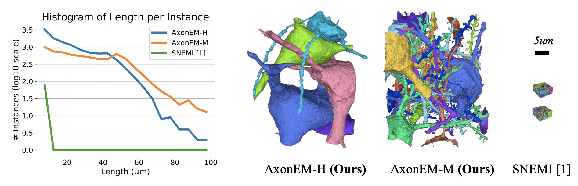 AxonEM Dataset: 3D Axon Instance Segmentation of Brain Cortical Regions