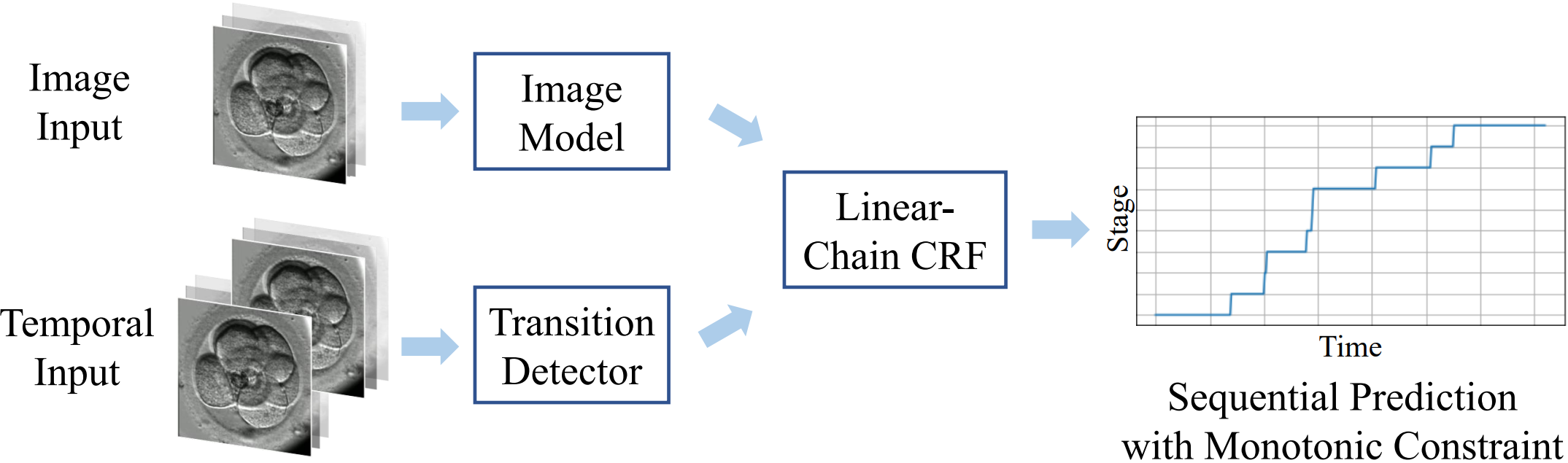 Developmental Stage Classification of Embryos Using Two-Stream Neural Network with Linear-Chain Conditional Random Field
